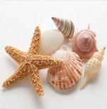 radiocarbon dating shells