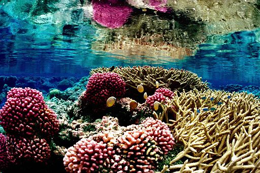 coral reef, radiocarbon dating