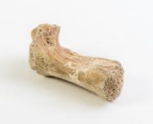 AMS Datierung Knochen eingeäschert