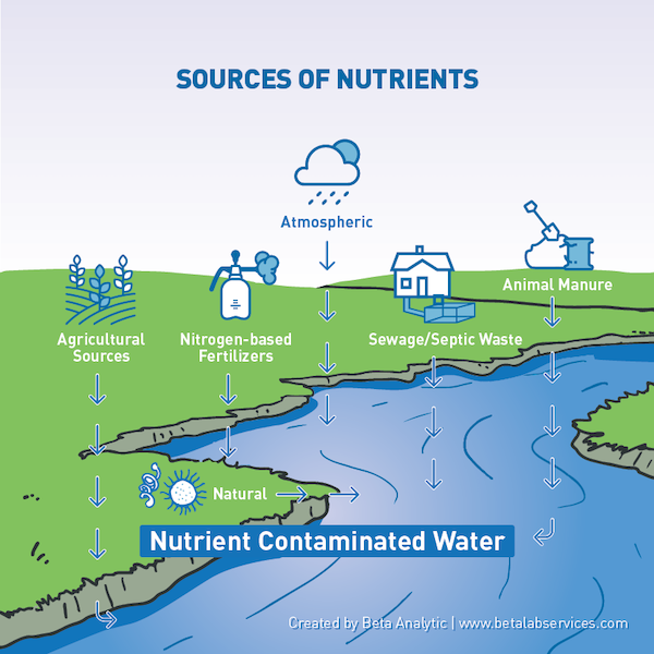Beta Analytic Sources of Nutrients Infographic